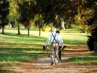 Nordic walking - starsi ludzie maszerują z kijkami po parku