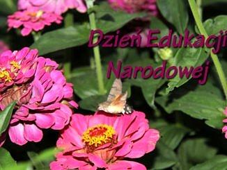 Kwiaty - Dzień Edukacji Narodowej