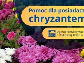 Plakat ARiMR - Pomoc dla posiadaczy chryzantem