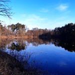 Staw w Wygodzie, drzewa, niebieska tafla wody
