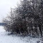 Działka zarośnięta krzakami w scenerii zimowej ze śniegiem
