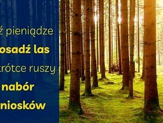 Na tle lasu prześwietlonego słońcem na niebieskim paski żółty napis : Weź pieniądze i posadź las – nabór wniosków