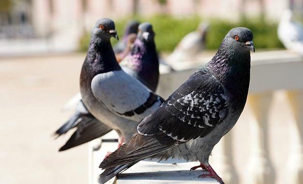 gołębie freepik zblizenie-selektywne-focus-strzal-golebi-w-parku-z-zielenią