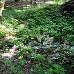 Składowisko plastikowych butelek w leśnej ściółce