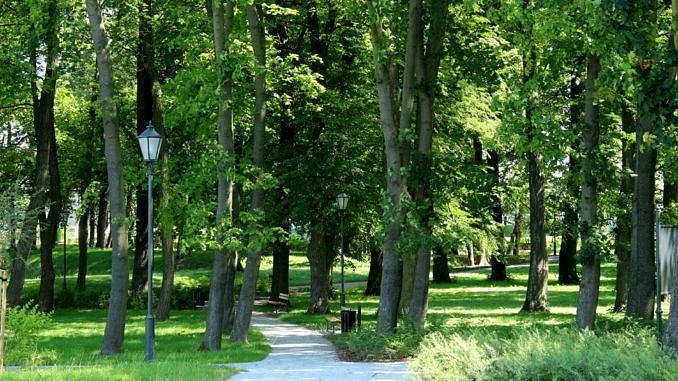 Alejki parkowe z latarniami w otoczeniu wysokich drzew
