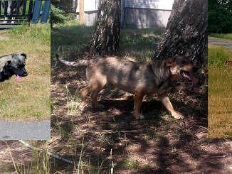 Trzy bezdomne psy