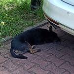Mały czarny pies
