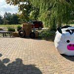Plac przed domem ludowym ozdobiony krówką zrobioną z balotu ze słomą