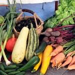 Piękne jesienne warzywa - marchew, buraki, cukinie, dynie, pory, kpusta